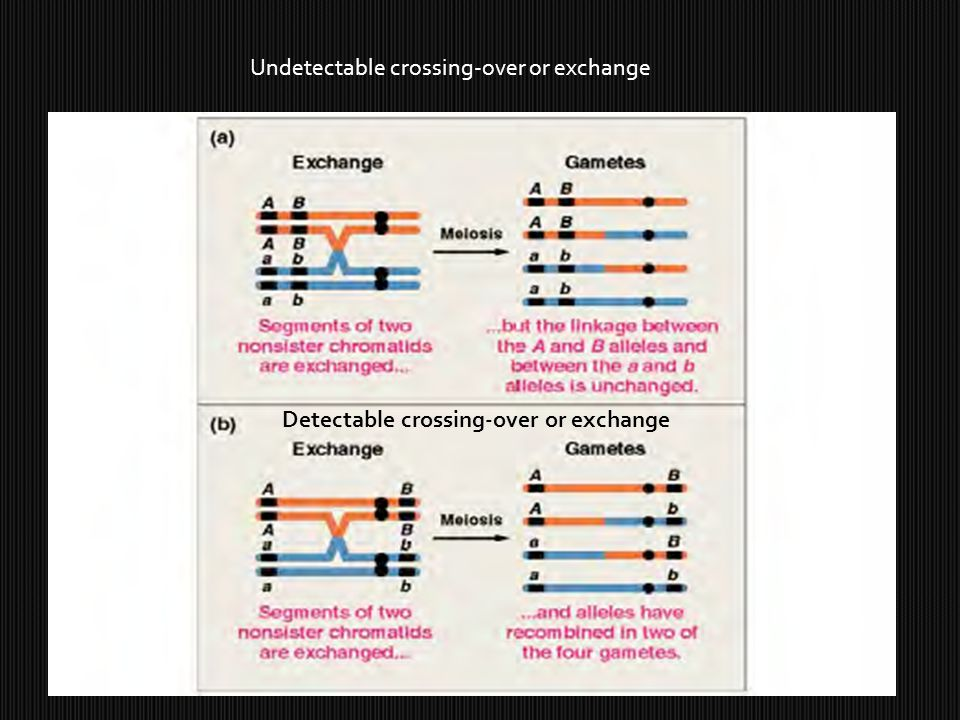 Undetectable crossing-over or exchange