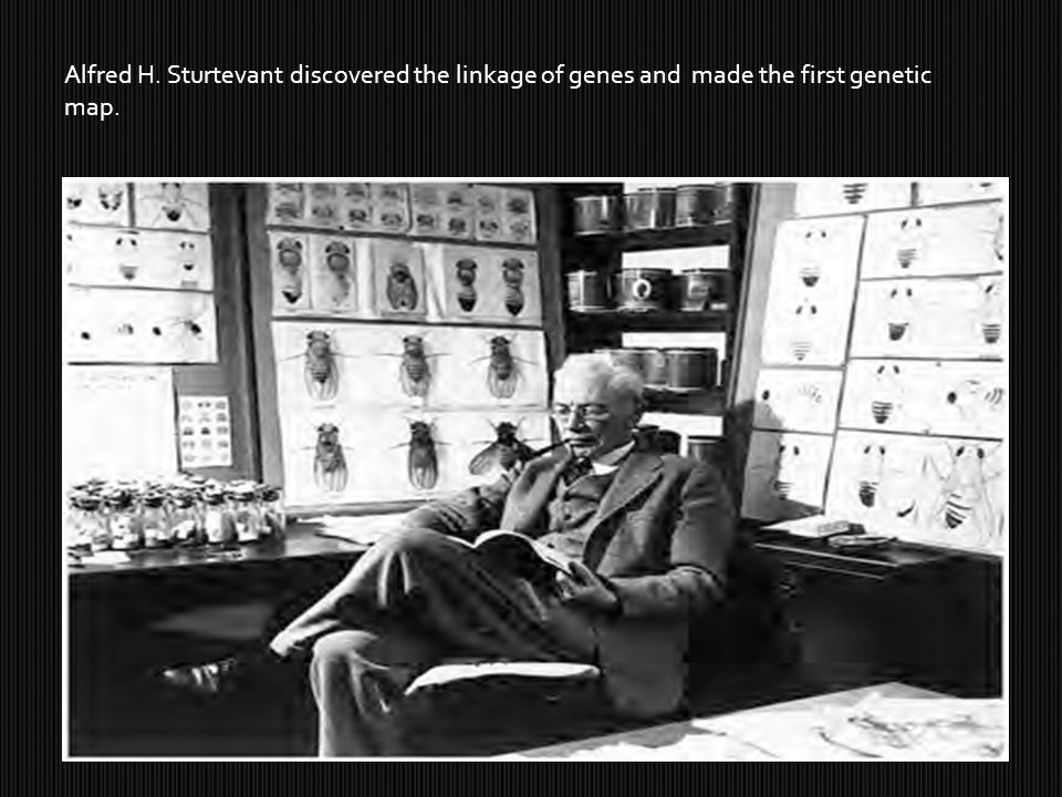Alfred H. Sturtevant discovered the linkage of genes and made the first genetic map.