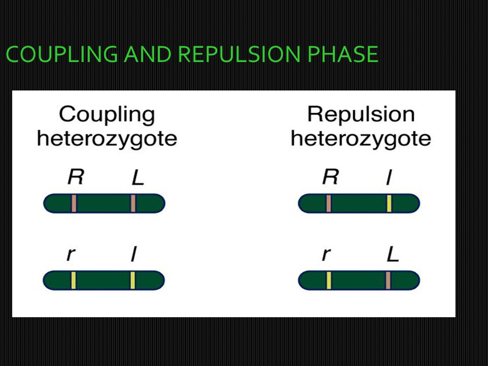 COUPLING AND REPULSION PHASE