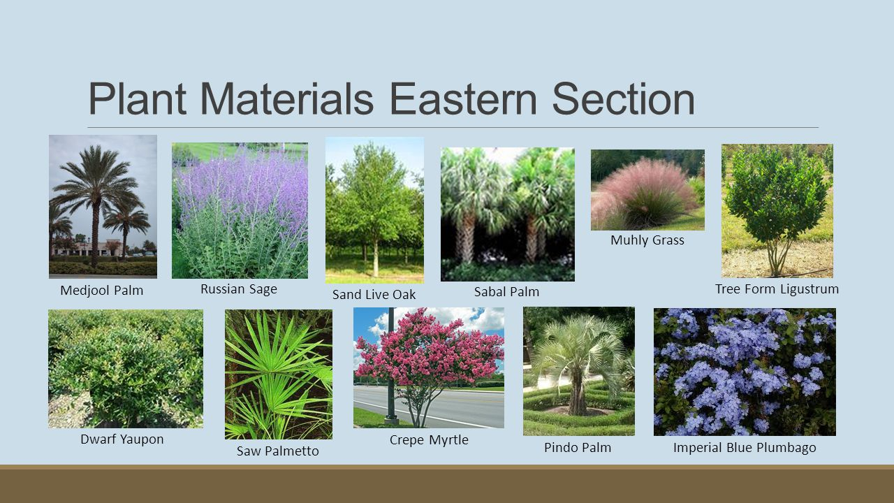 Plant Materials Eastern Section