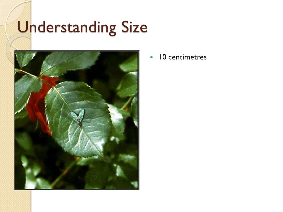 Understanding Size 10 centimetres