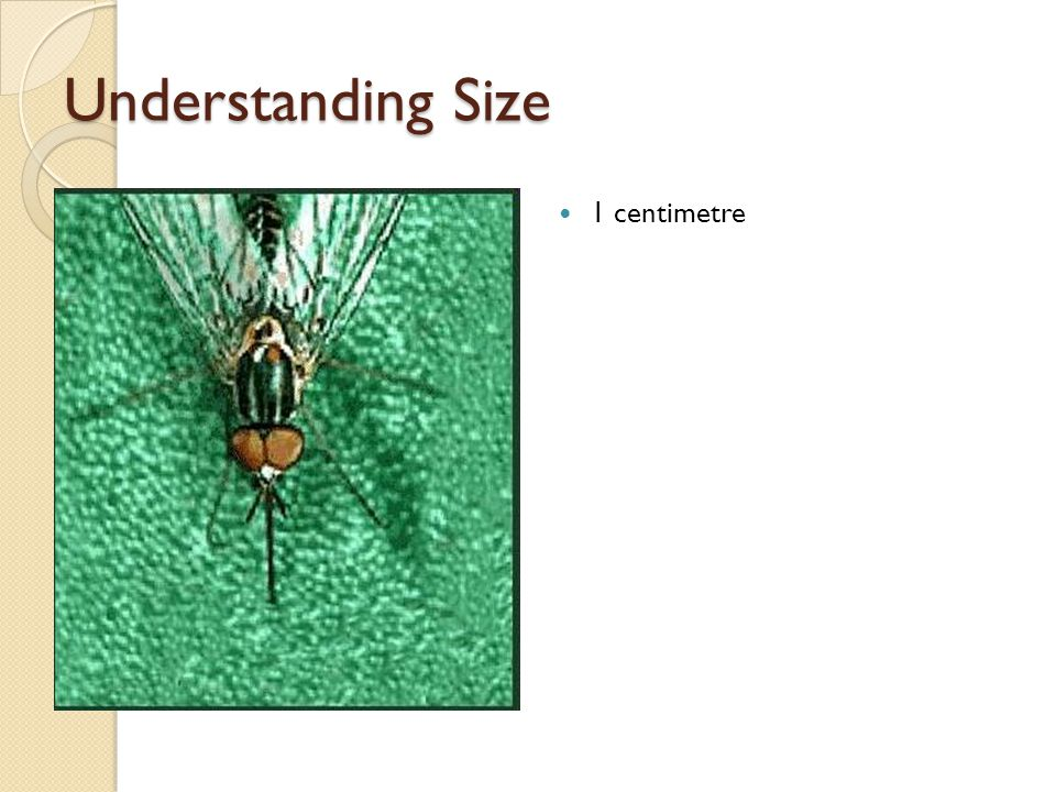 Understanding Size 1 centimetre