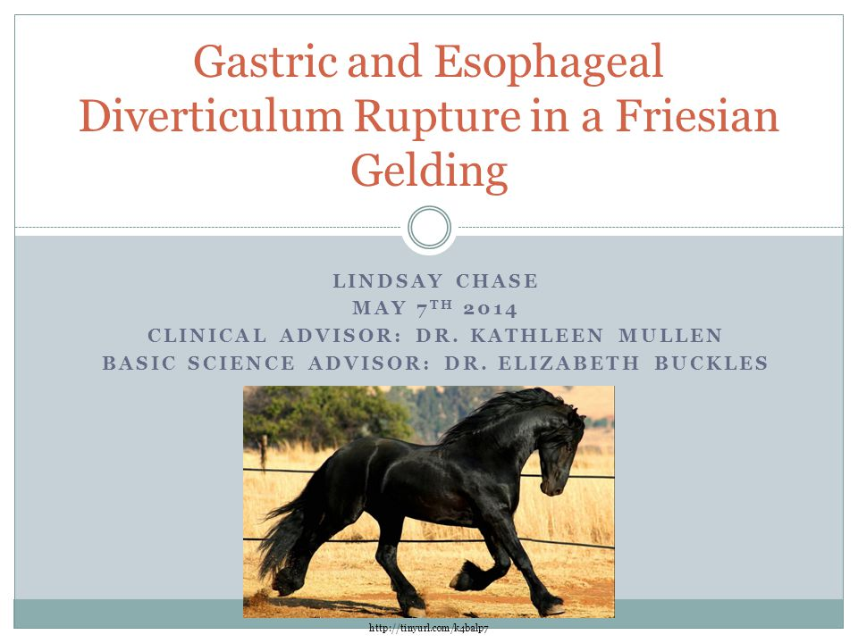 Gastric and Esophageal Diverticulum Rupture in a Friesian Gelding