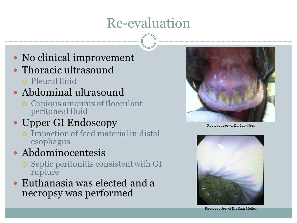 Re-evaluation No clinical improvement Thoracic ultrasound