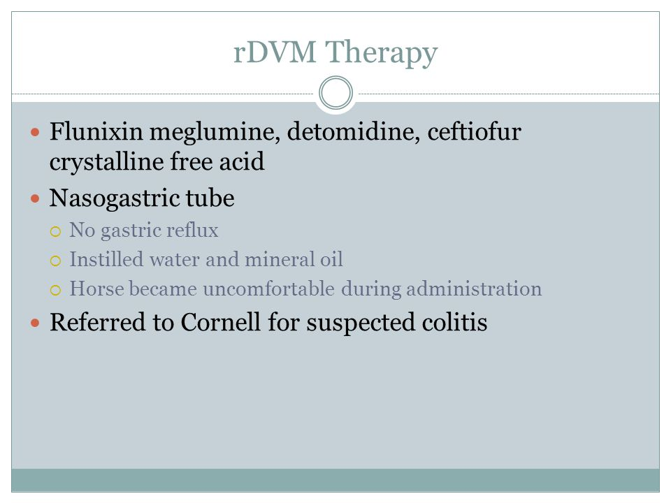 rDVM Therapy Flunixin meglumine, detomidine, ceftiofur crystalline free acid. Nasogastric tube. No gastric reflux.
