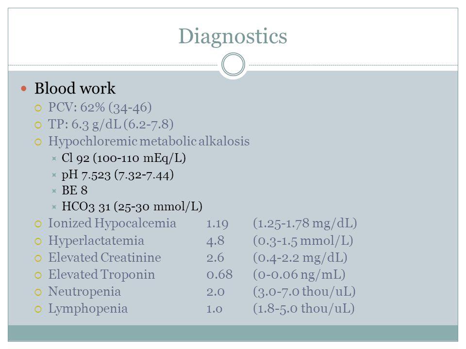 Diagnostics Blood work PCV: 62% (34-46) TP: 6.3 g/dL (6.2-7.8)