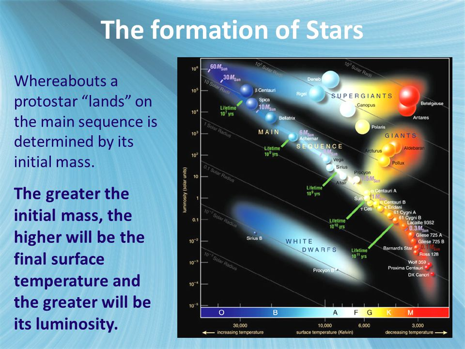 The formation of Stars Whereabouts a protostar lands on the main sequence is determined by its initial mass.