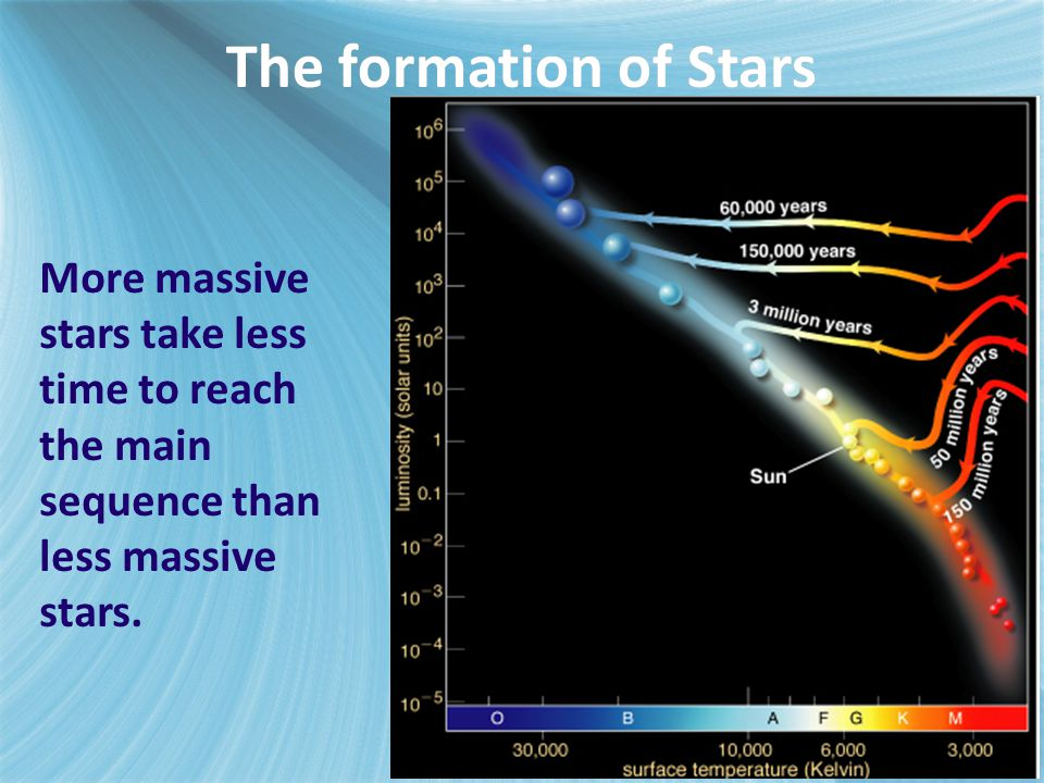The formation of Stars More massive stars take less time to reach the main sequence than less massive stars.
