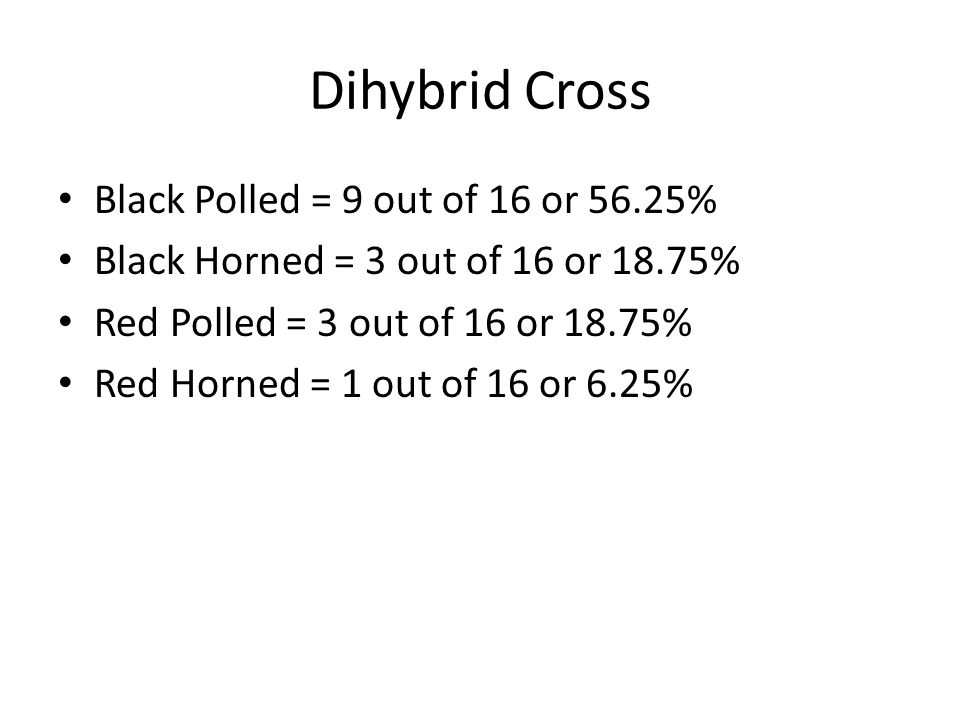 Dihybrid Cross Black Polled = 9 out of 16 or 56.25%
