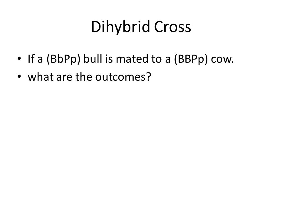 Dihybrid Cross If a (BbPp) bull is mated to a (BBPp) cow.