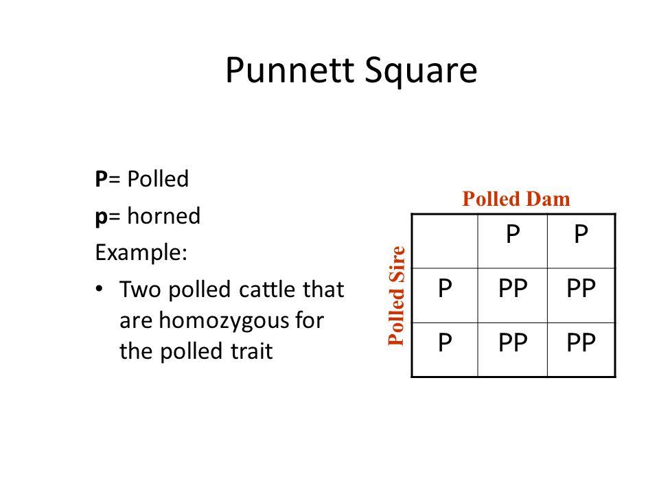 Punnett Square P PP P= Polled p= horned Example: