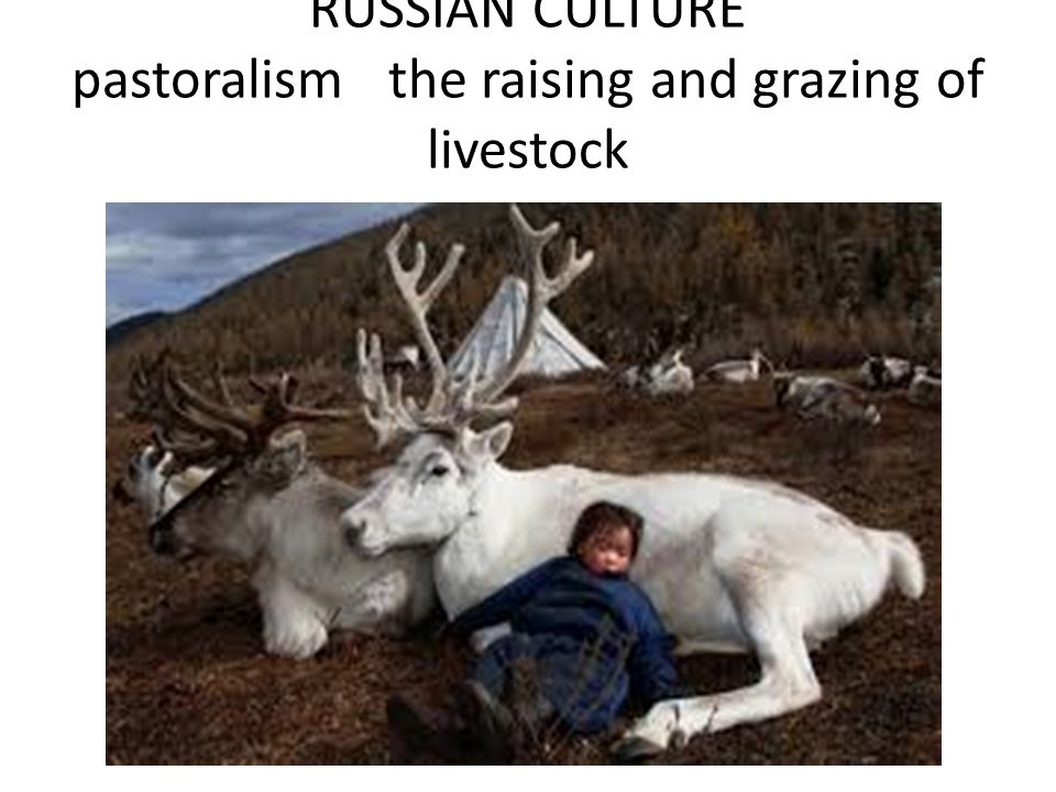 RUSSIAN CULTURE pastoralism the raising and grazing of livestock