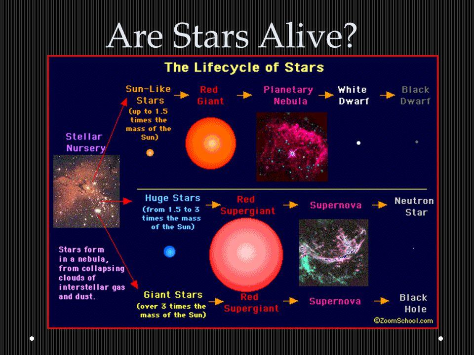Are Stars Alive
