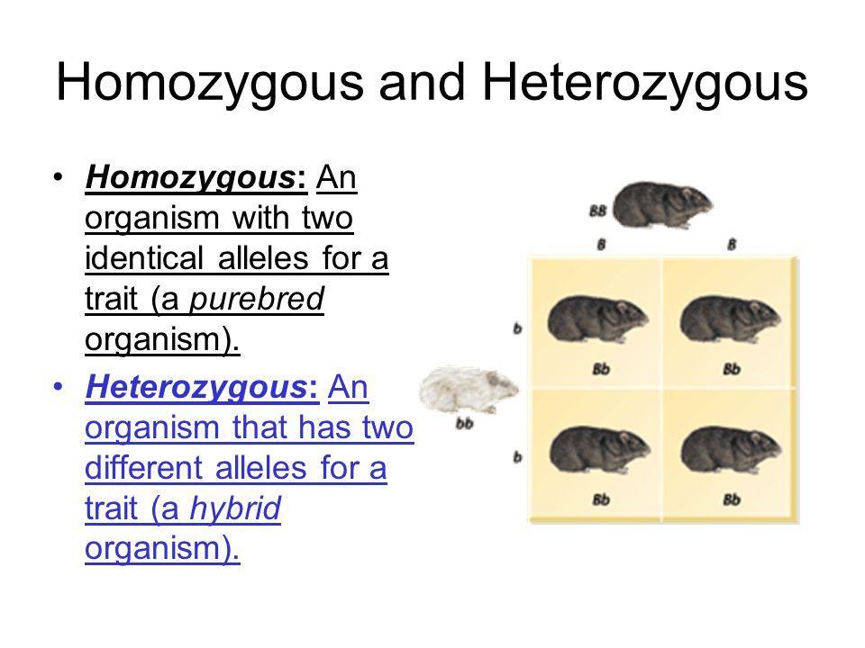 Homozygous and Heterozygous