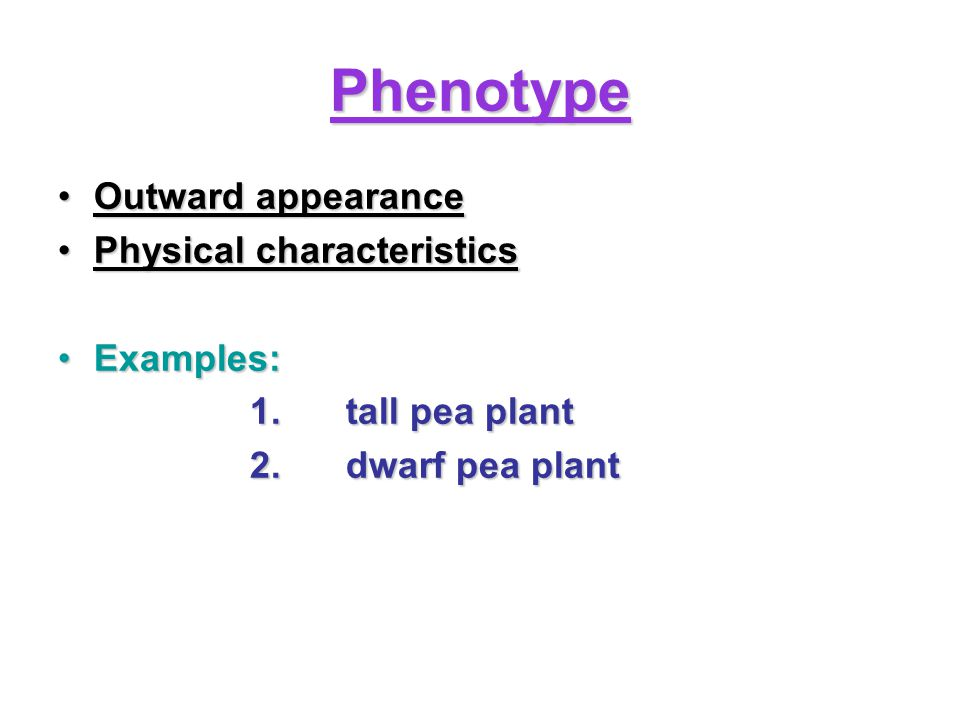 Phenotype Outward appearance Physical characteristics Examples: