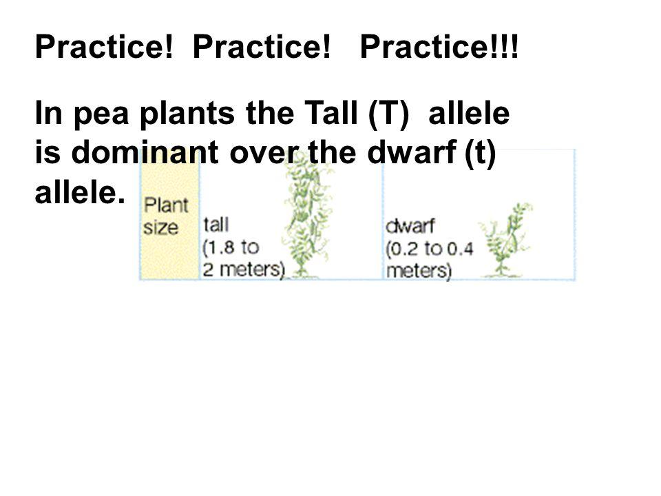 Practice! Practice! Practice!!!