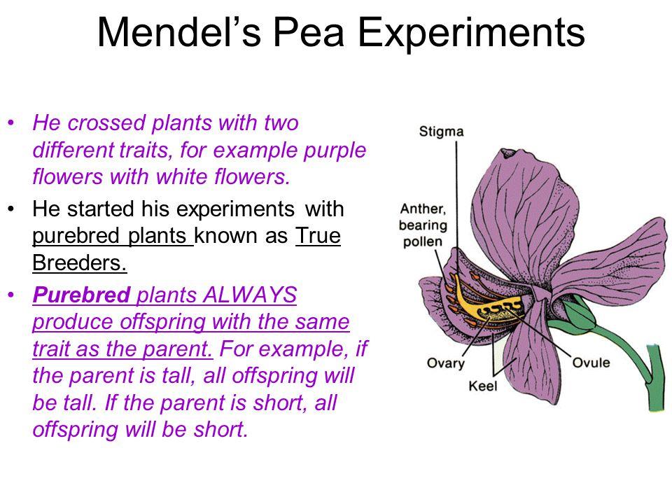 Mendel's Pea Experiments