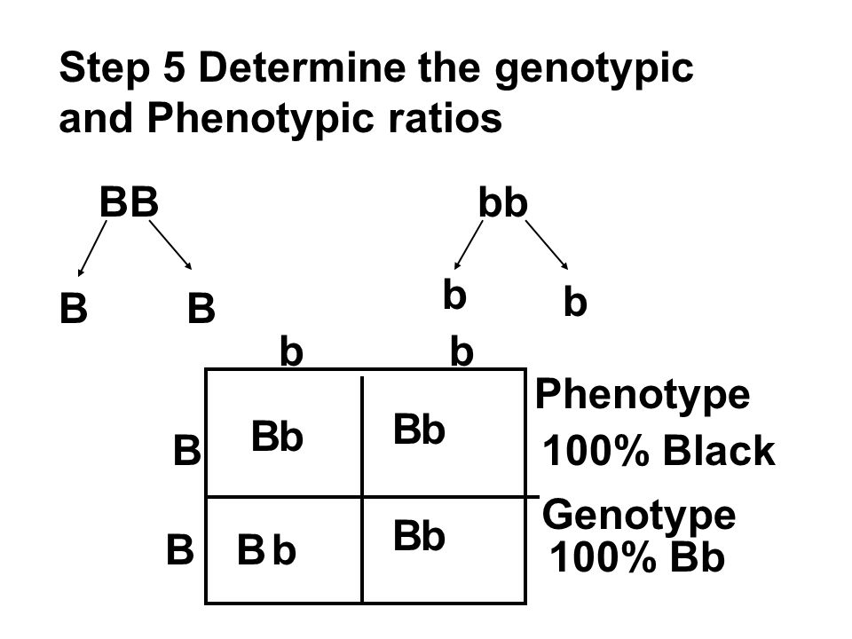 Step 5 Determine the genotypic and Phenotypic ratios