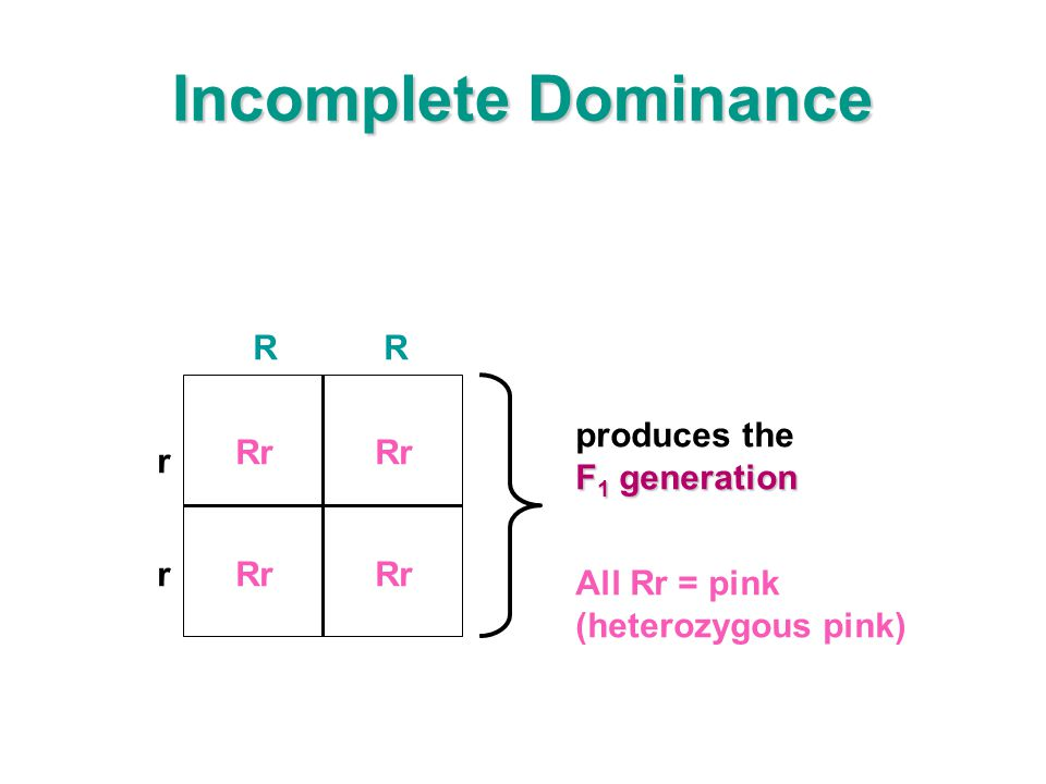 Incomplete Dominance R produces the Rr F1 generation r All Rr = pink