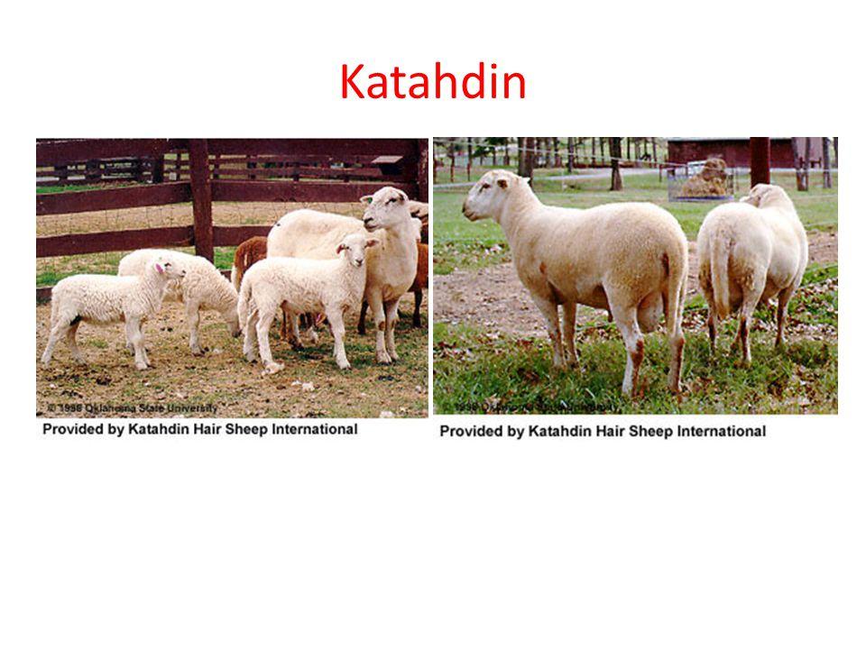 Katahdin