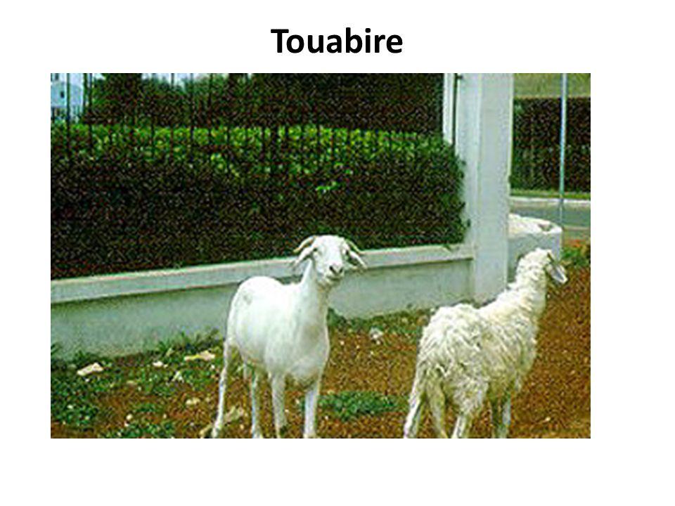 Touabire