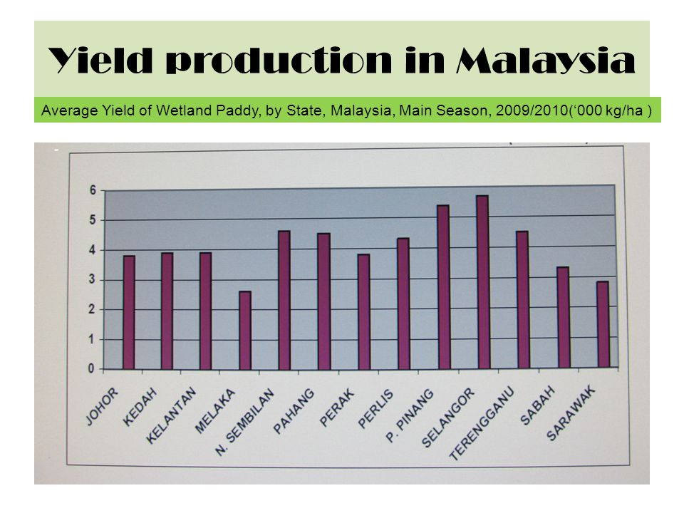 Yield production in Malaysia
