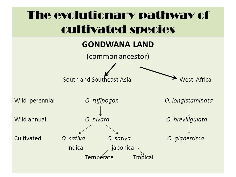 The evolutionary pathway of cultivated species