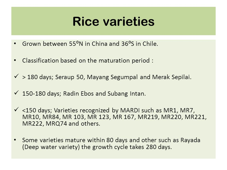 Rice varieties Grown between 55⁰N in China and 36⁰S in Chile.