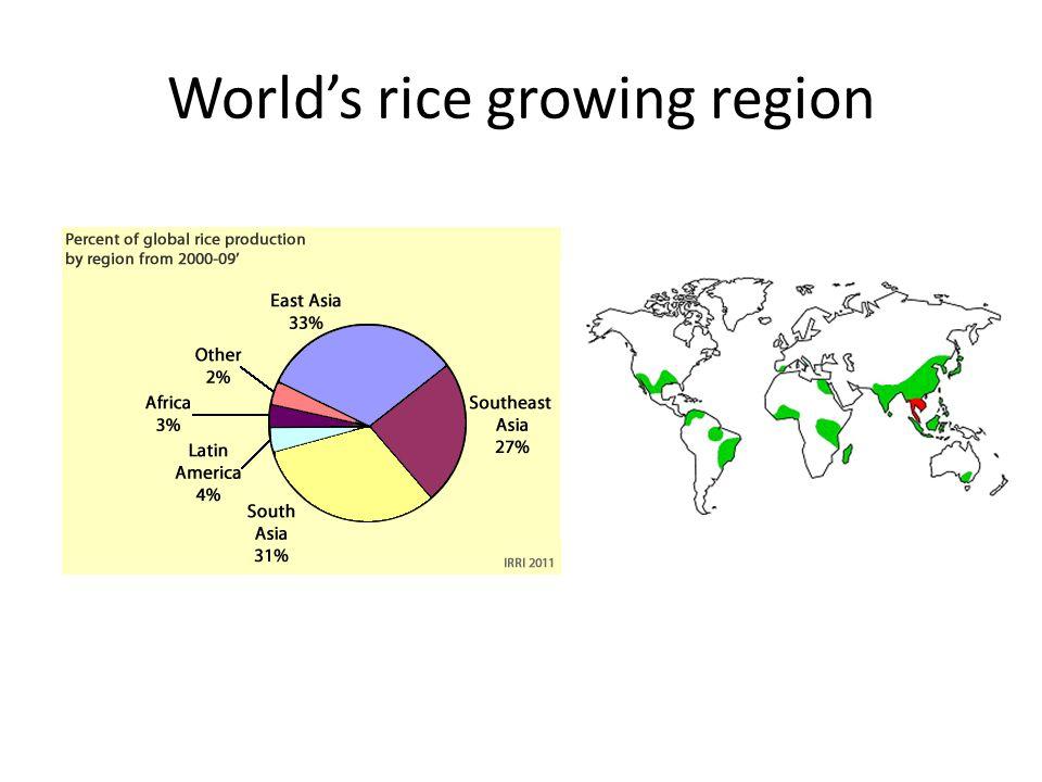 World's rice growing region