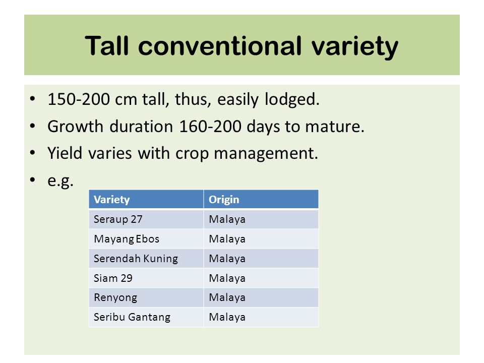 Tall conventional variety