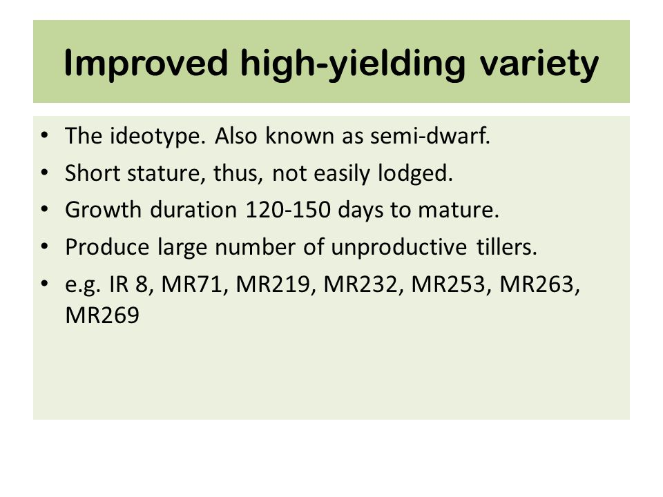 Improved high-yielding variety