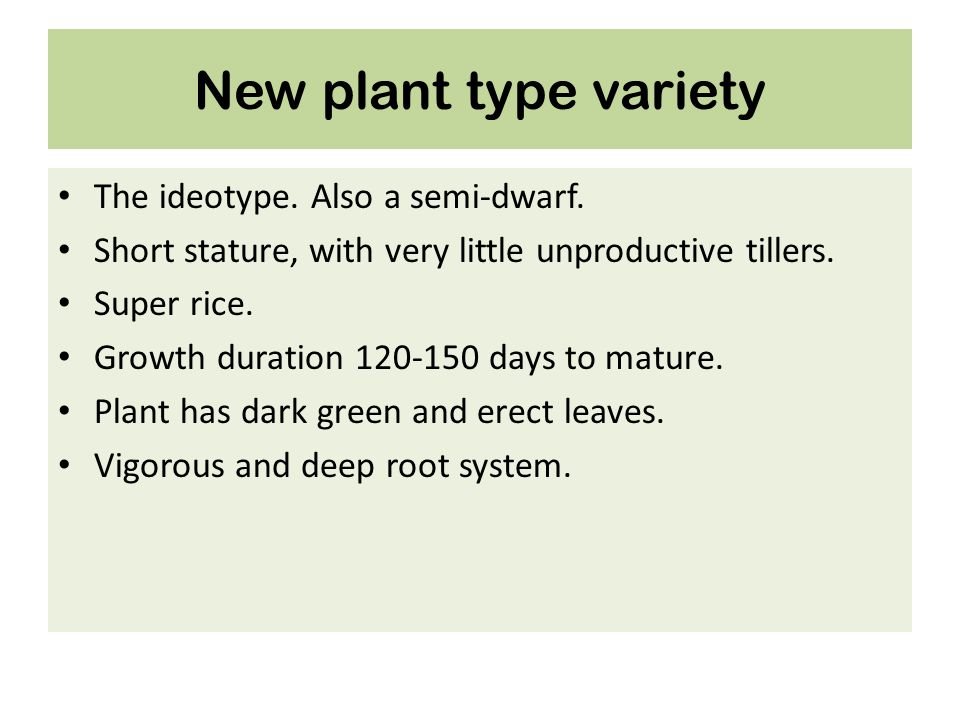 New plant type variety The ideotype. Also a semi-dwarf.