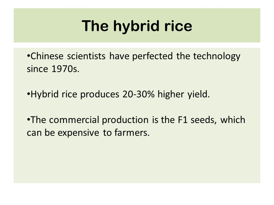 The hybrid rice Chinese scientists have perfected the technology since 1970s. Hybrid rice produces 20-30% higher yield.