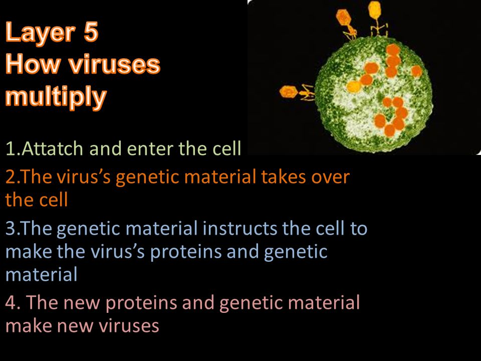 Layer 5 How viruses multiply