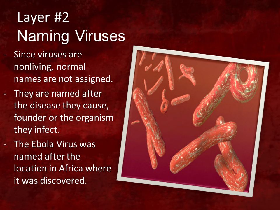 Layer #2 Naming Viruses Since viruses are nonliving, normal names are not assigned.