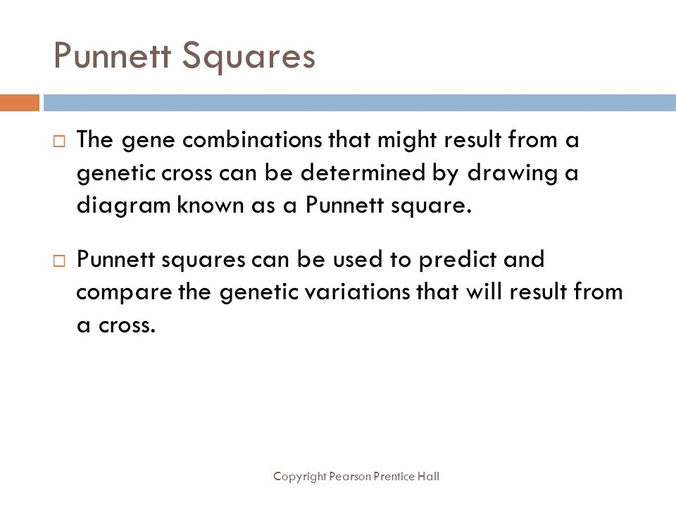 Punnett Squares The gene combinations that might result from a genetic cross can be determined by drawing a diagram known as a Punnett square.