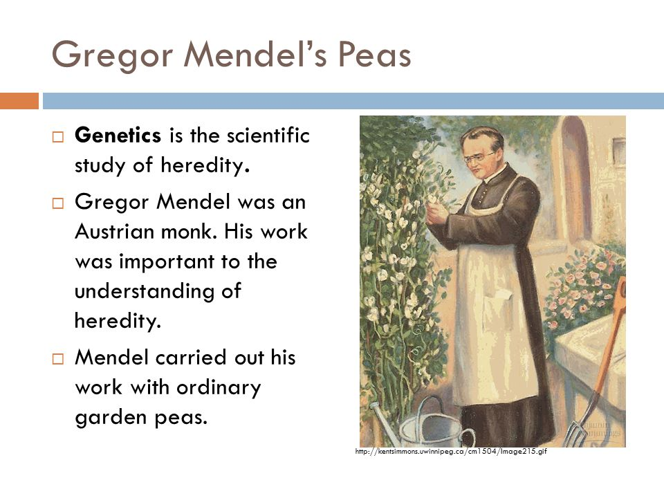 Gregor Mendel's Peas Genetics is the scientific study of heredity.