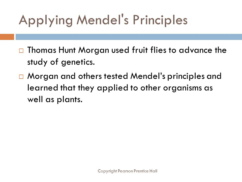 Applying Mendel s Principles