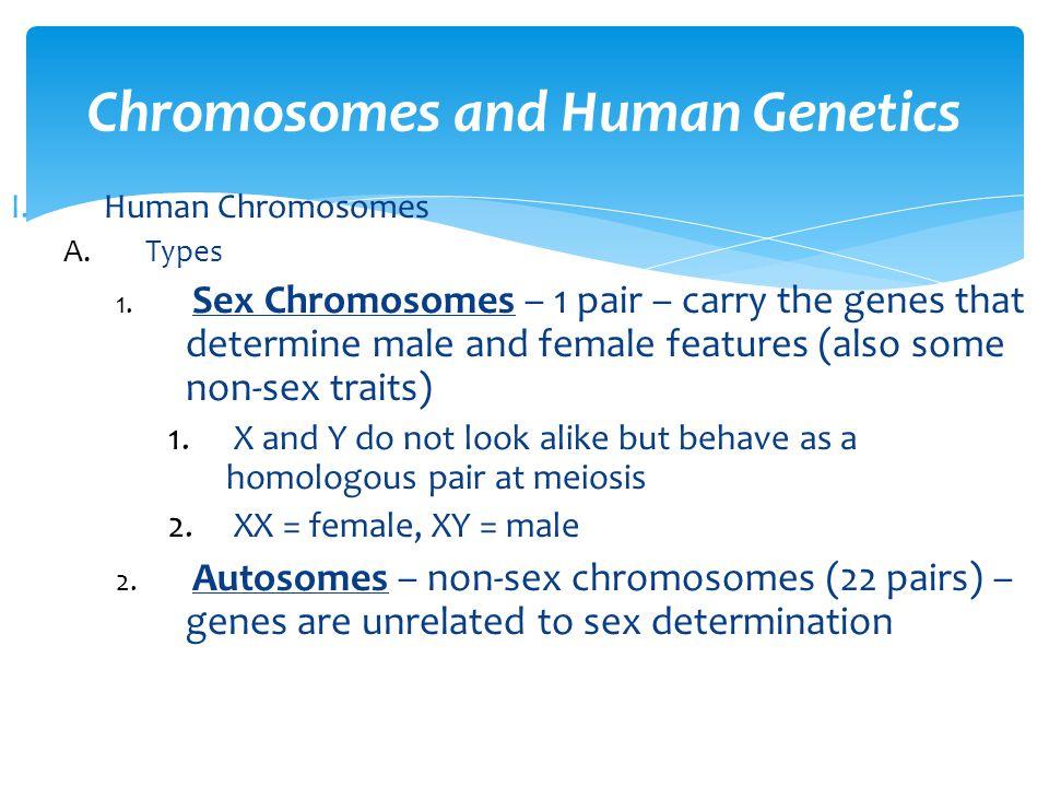 Chromosomes and Human Genetics