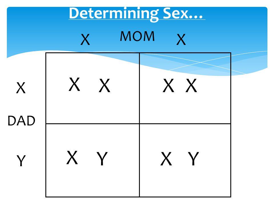 Determining Sex… MOM X X X X X X X DAD X Y X Y Y