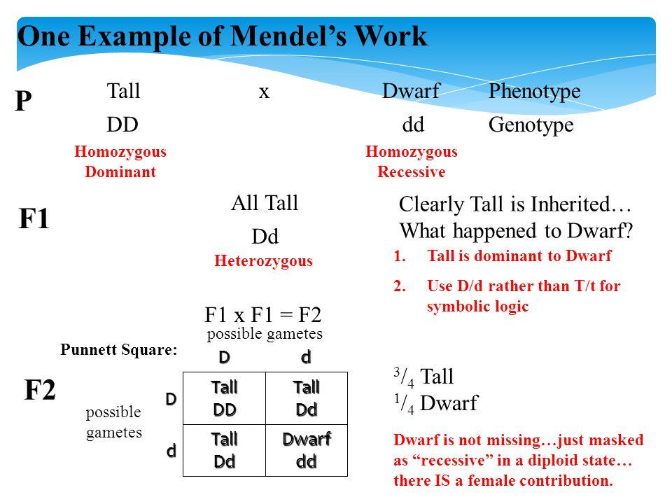 One Example of Mendel's Work