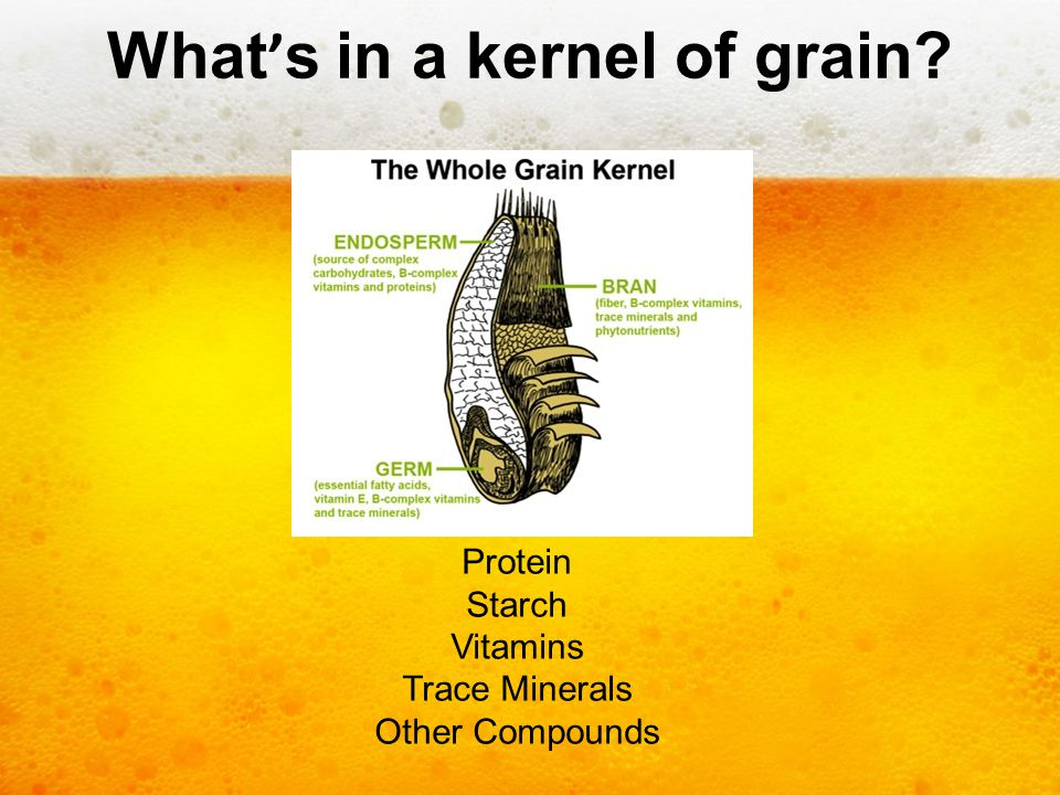 What's in a kernel of grain