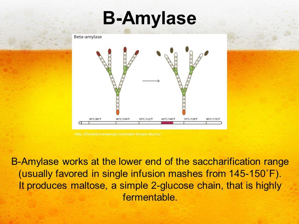 B-Amylase http://homebrewmanual.com/mash-temperatures/
