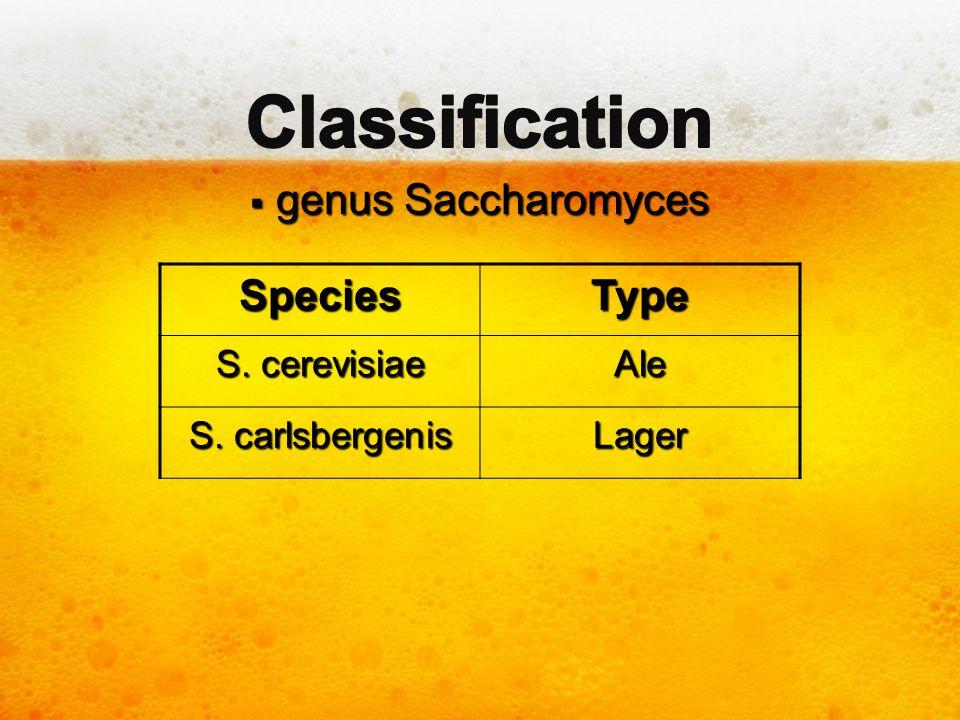 Classification genus Saccharomyces Species Type S. cerevisiae Ale