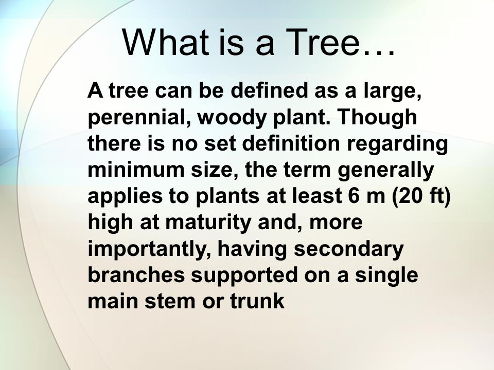What is a Tree…