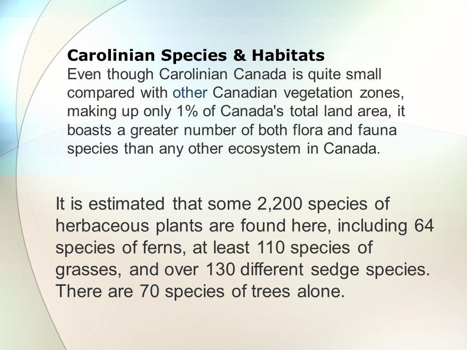 Carolinian Species & Habitats