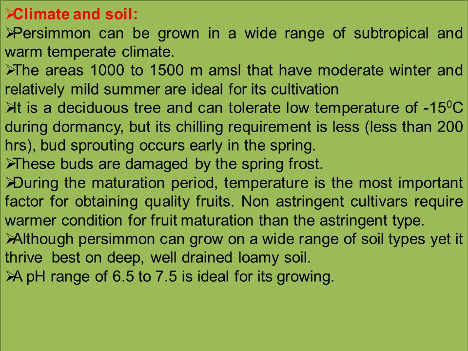 Climate and soil: Persimmon can be grown in a wide range of subtropical and warm temperate climate.