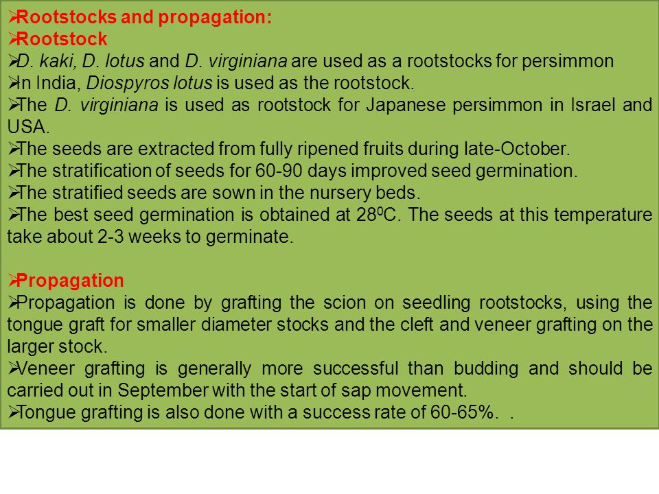 Rootstocks and propagation: