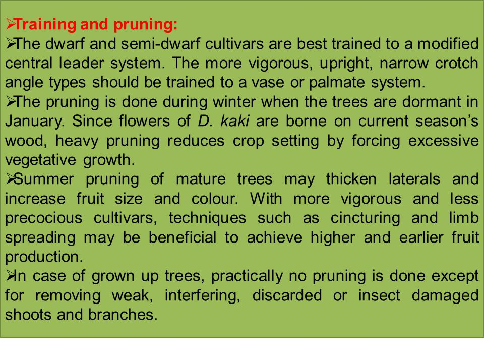 Training and pruning: