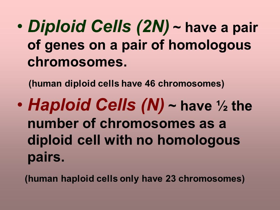 Diploid Cells (2N) ~ have a pair of genes on a pair of homologous chromosomes.